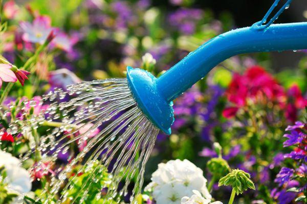Prepara tu jardín para este verano